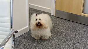 All hail the office dog. What's helping to keep you sane?